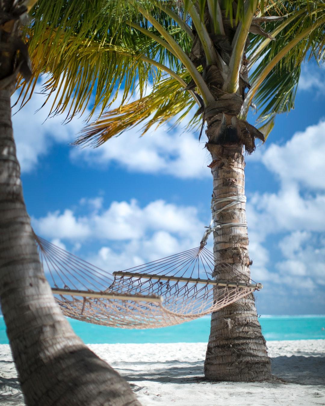 hammock and trees